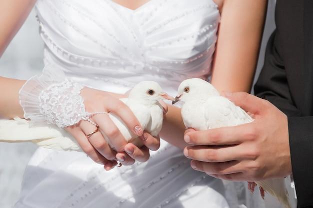 Gołębie ślubne w rękach pana młodego i panny młodej