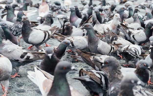 Gołębie współczujące na rynku miejskim