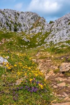 Góra aizkorri 1523 metrów, najwyższa w guipuzcoa. kraj basków. żółte kwiaty powyżej u góry. podejdź przez san adrian i wróć przez pola oltza