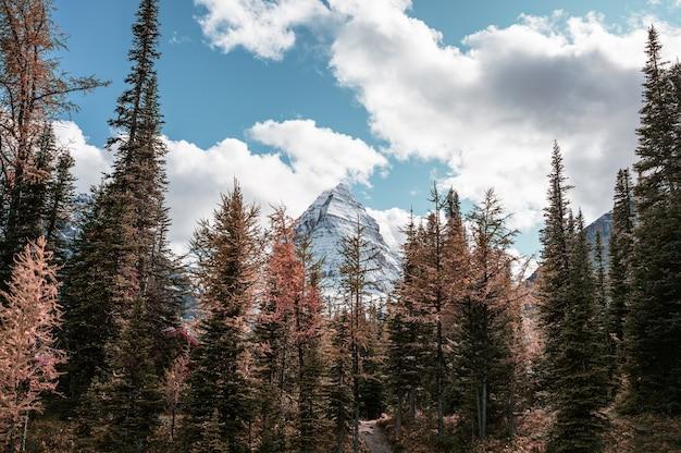 Góra assiniboine z błękitnym niebem w jesiennym lesie w provincial park, bc, kanada