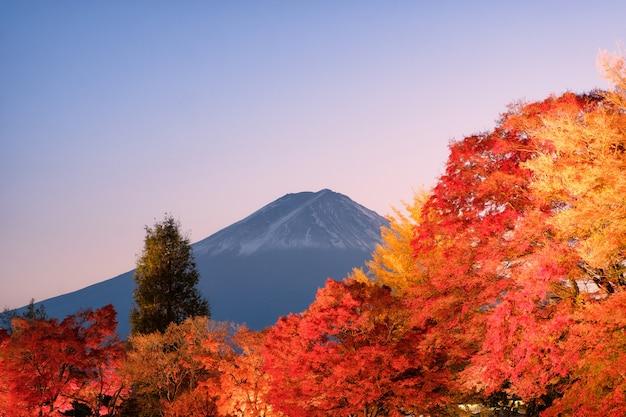 Góra fuji nad czerwonym klonowym ogrodem rozświetlonego jesiennego festiwalu w jeziorze kawaguchiko, yamanashi, japonia