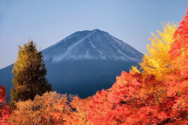 Góra fuji nad ogrodem czerwonego klonu rozjaśnia jesienny festiwal w jeziorze kawaguchiko, yamanashi, japonia