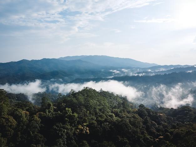 Góra i drzewo latem podróże przyrodnicze
