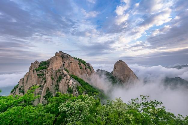 Góra i mgła w parku narodowym bukhansan w seulu w korei południowej