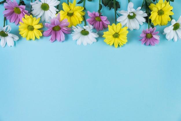 Górna obramowanie wykonane z żółtego; różowe i białe kwiaty rumianku na niebieskim tle