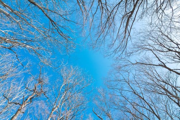 Górne gałęzie drzew na tle błękitnego nieba