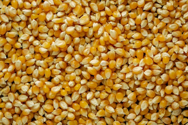 Górne zdjęcie ziaren kukurydzy, gdzie światło pada na nie z boku, aby podkreślić ich teksturę i cienie