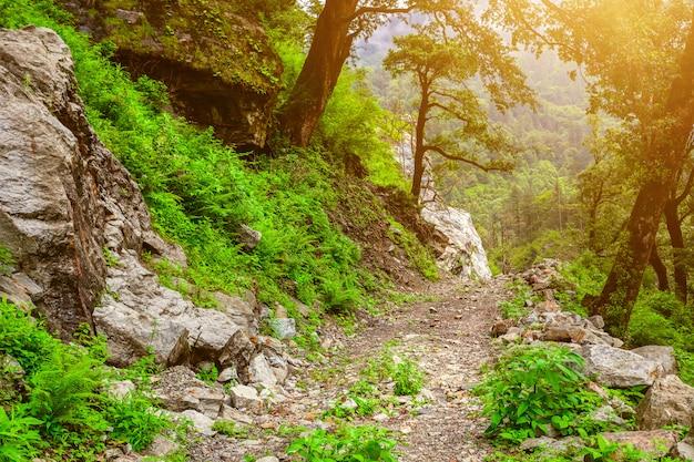 Górska droga w dolinie