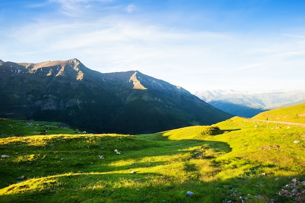 Górska łąka w pirenejach w lecie
