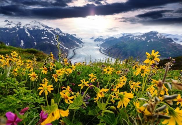 Górska łąka w słoneczny dzień. naturalny krajobraz lato.