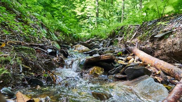 Górska rzeka khosta, lato w soczi, rosja