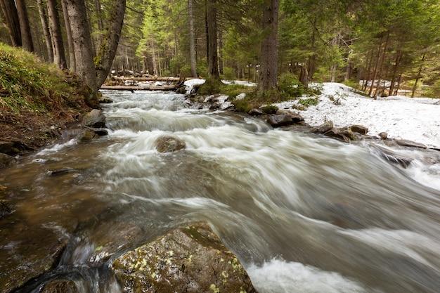 Górska rzeka. krajobraz górskiego przepływu wody w lesie.