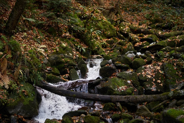 Górska rzeka natura las podróż styl życia