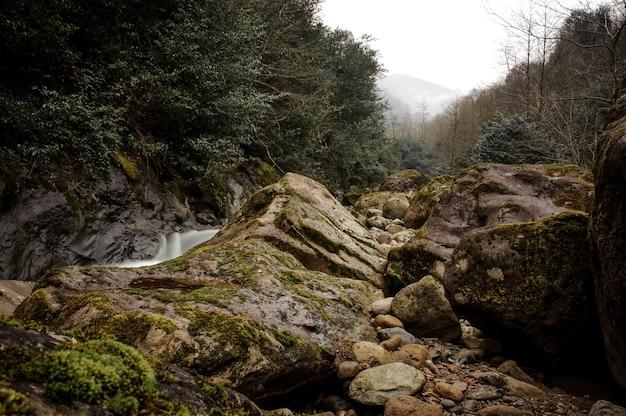 Górska rzeka płynie otoczona kamieniami pokrytymi mchem i bujnymi liśćmi w łaźniach afrodyty w gruzji
