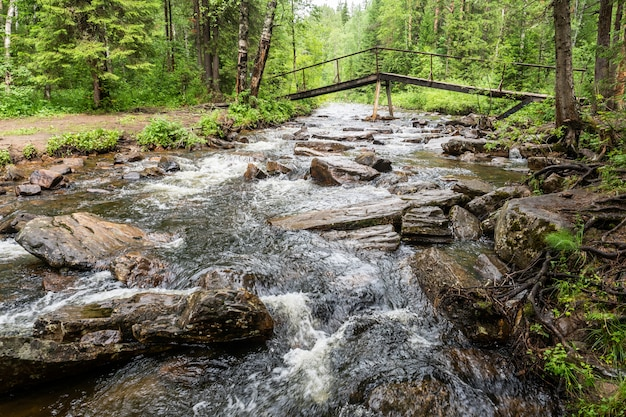 Górska rzeka w lesie