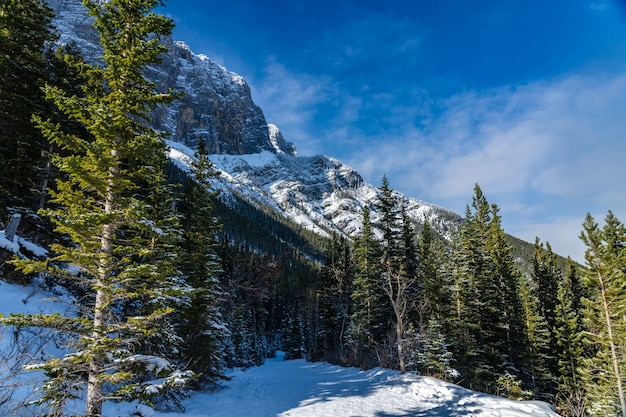Górska ścieżka pokryta śniegiem w lesie w sezonie zimowym słoneczny dzień rano. szlak jezior grassi