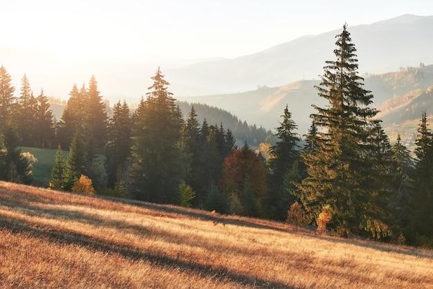 Górski krajobraz jesień z kolorowym lasem.