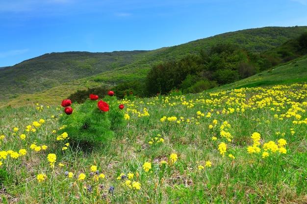Górski krajobraz, łąka z zielonym trawnikiem, mała wioska i wzgórza w oddali, białe chmury na niebie
