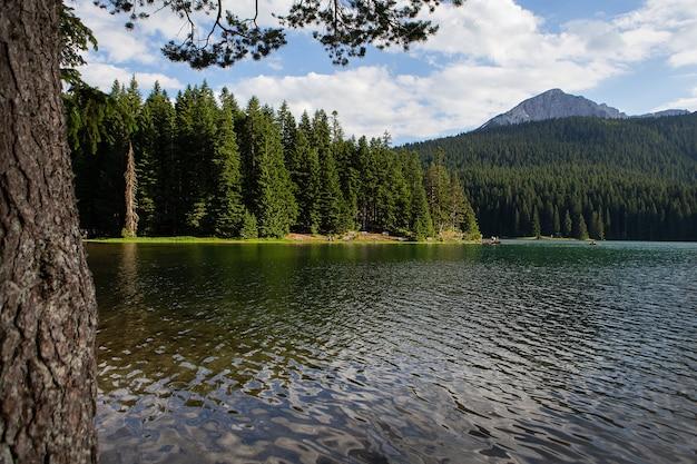 Górski krajobraz, park narodowy durmitor, czarnogóra. piękny widok na jezioro ławeczki w pobliżu jeziora w pięknym lesie.