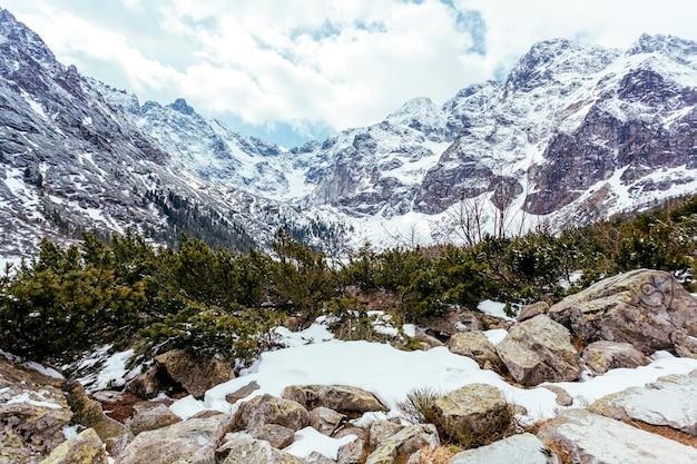 Górski krajobraz z drzewami w lecie