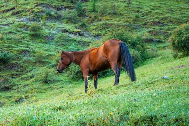 Górski krajobraz z wypasanym koniem w dolinie, georgia. zwierzę