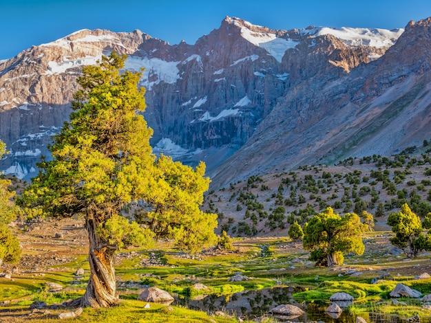 Górski krajobraz z zielonym jałowcem w słońcu na skalistej górze. góry fann, tadżykistan, azja środkowa