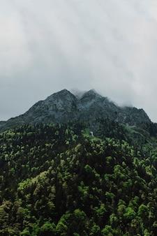 Górski krajobraz z zielonymi drzewami