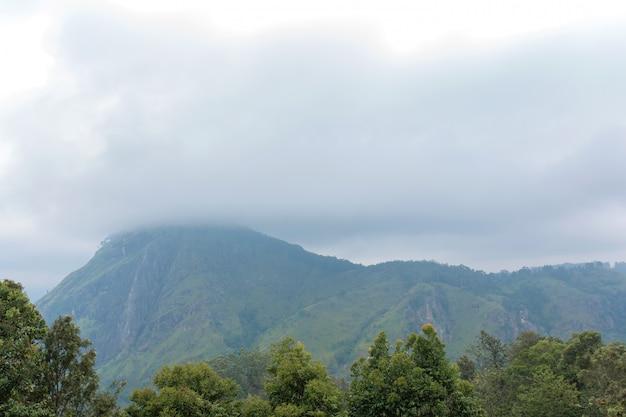 Górski krajobraz, zielone zbocza. piękno gór. mały szczyt adama, góra we mgle widok z dżungli