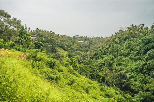 Górski las porośnięty gęstą zielenią w pochmurny dzień