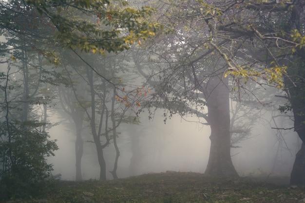 Górski las w gęstej mgle