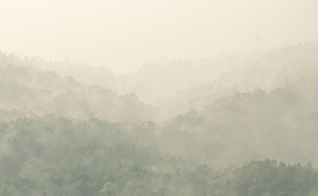 Górski las we mgle po deszczu rano