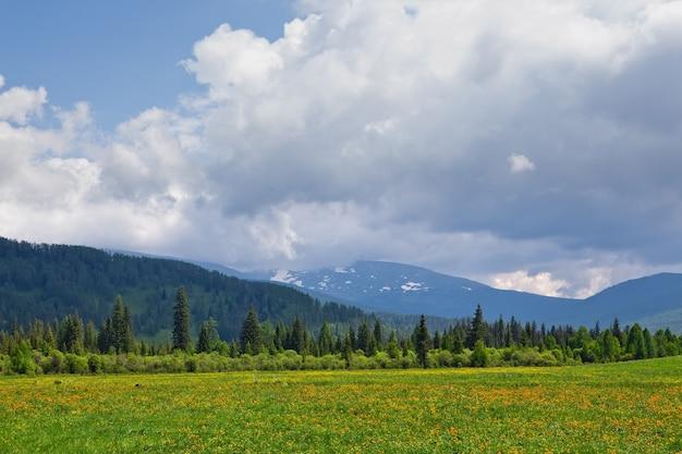 Górski letni krajobraz łąka z kwiatami