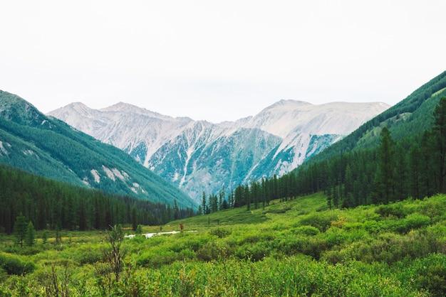 Górski potok w dolinie na tle wspaniałych gigantycznych gór. bogata roślinność i bór wyżynny.