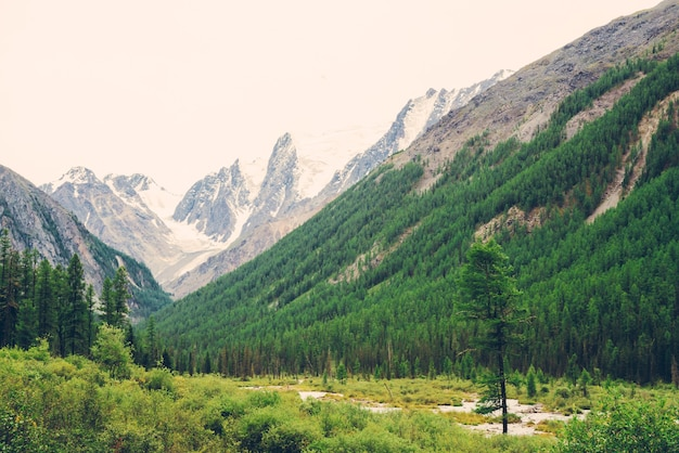 Górski potok w dolinie przed zaśnieżonymi górami