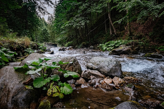 Górski potok w parku narodowym wysokie tatry, polska