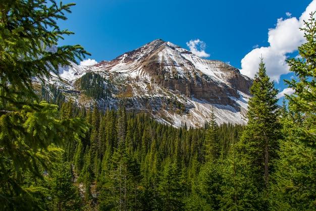 Górski szczyt z lasem i niebieskim niebem