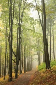 Górski szlak przez jesienny las bukowy w mglistej pogodzie