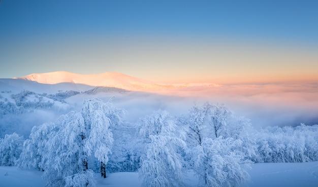 Górski zimowy krajobraz. o świcie pokryte śniegiem drzewa na szczycie góry.