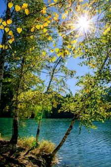 Górskie jesienne zielone jezioro syberii z odbiciem, brzozą i promieniami słonecznymi z jasnego słońca świecącego między drzewami