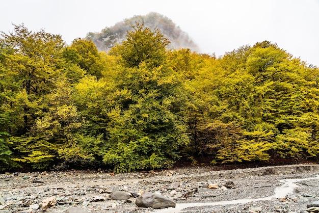 Górskie koryto rzeki w sezonie jesiennym