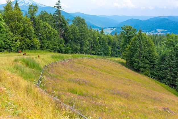 Górskie wzgórza czysta natura wiejski krajobraz. ogrodzenie z bali drewnianych.