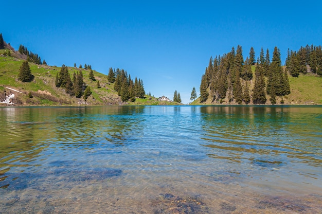 Góry i drzewa w szwajcarii otoczone jeziorem lac lioson