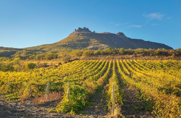 Góry i pola z winnicami. kompozycja natury