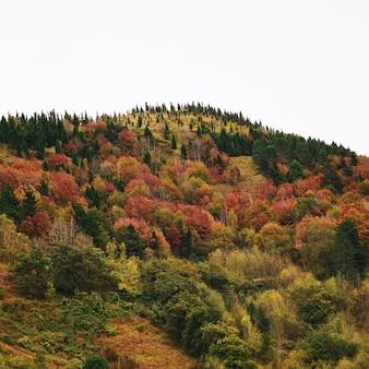 Góry jesienią w bilbao
