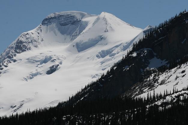 Góry pokryte śniegiem i drzewami w parkach narodowych banff i jasper