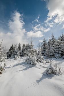 Góry z drzewami pokrytymi śniegiem