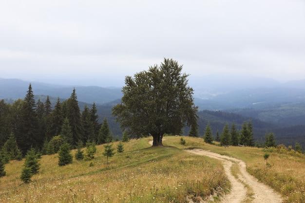 Górzysta wieś. ścieżka pod górę na odległość. piękny wiejski krajobraz karpat. ukraina, europa.