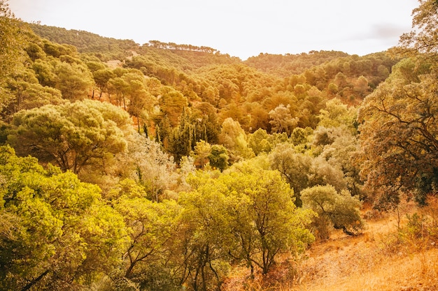 Górzysty krajobraz pagórkowaty