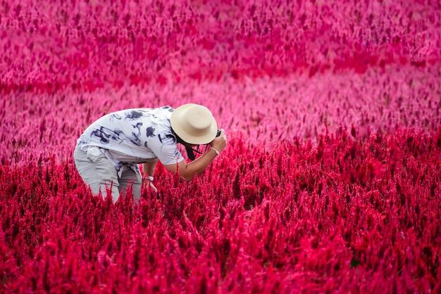 Gość robiący zdjęcie pięknego czerwonego kwiatu celosii w i love flower farm s chiangmai