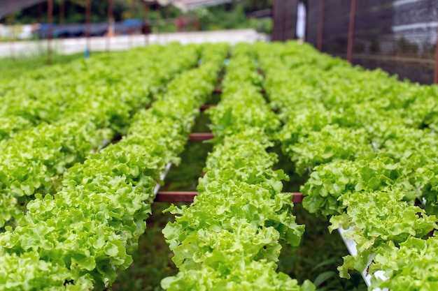 Gospodarstwo ekologiczne z warzyw rolnictwo hydroponicznych. ekologiczne warzywa to uprawy biznesu